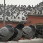 Kuşlar